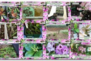 Посев рододендронов