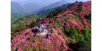 Рододендроновые леса Китая