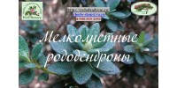 Мелколистные (Lepidote) рододендроны