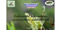 Мелколистные рододендроны: посадка и уход