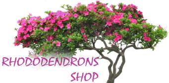Интернет-магазин  Rhododendrons Shop